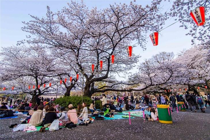 Hanami - Lễ hội đón mùa xuân của Nhật Bản - ảnh 1