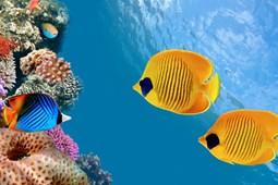 Từ vựng về sinh vật biển (2)