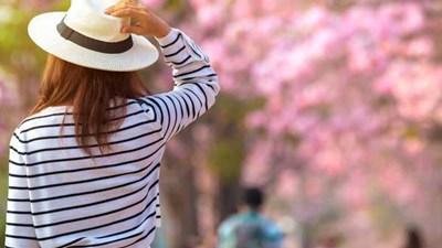 Sakura Anatani deaete yokatta - Sakura Thật vui vì em được gặp anh