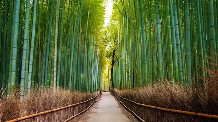 Phương pháp học tiếng Nhật online hiệu quả - ảnh 3
