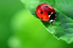 Từ vựng về các loại côn trùng (2)