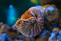Từ vựng về sinh vật biển (4)