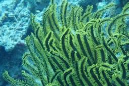 Từ vựng về sinh vật biển (3)
